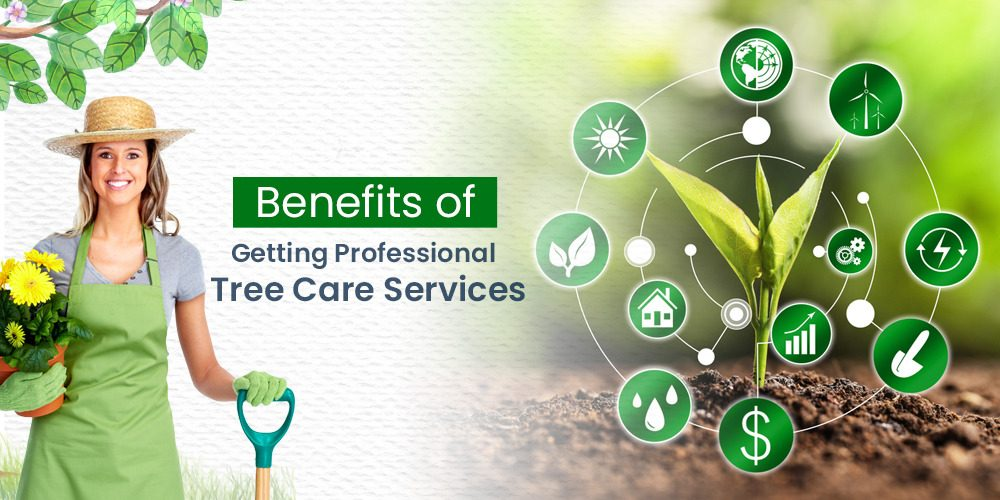 Benefits Of Getting Professional Tree Care Services