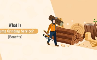 What Is Stump Grinding Service? [Benefits]