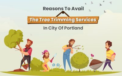 Reasons To Avail The Tree Trimming Services In City Of Portland