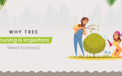 Why Tree Pruning Is Important [Need To Know]