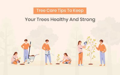 Top 9 Tree Care Tips To Keep Your Trees Strong And Healthy