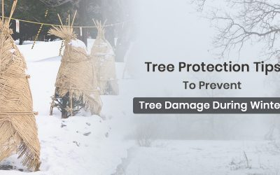Tree Protection Tips To Prevent Tree Damage During Winter
