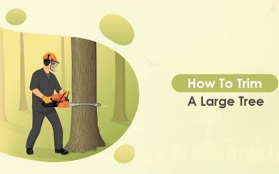 How To Trim A Large Tree