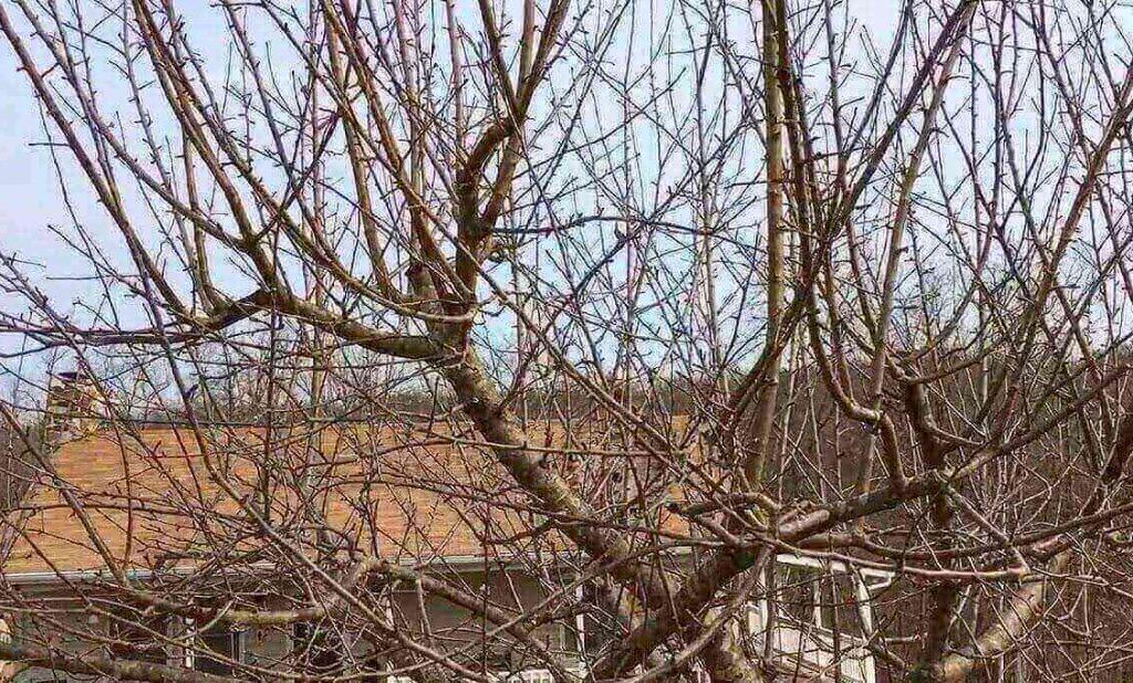 Overgrown-Trees