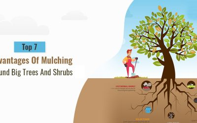 Top 7 Advantages Of Mulching Around Big Trees And Shrubs
