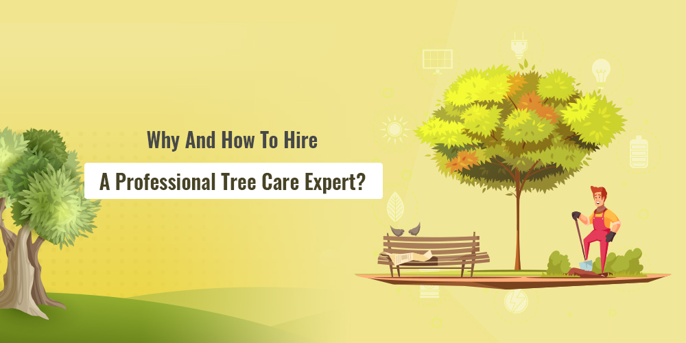 Why And How To Hire A Professional Tree Care Expert?