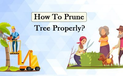 How To Prune Trees Properly?