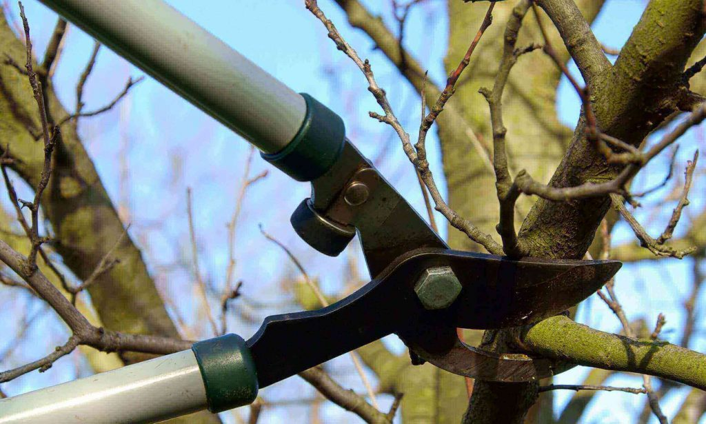 Tree-Pruning-Beaverton-Oregon