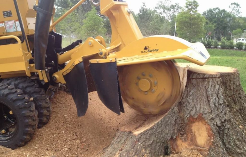 Tree-Stump-Grinding-Beaverton-Oregon
