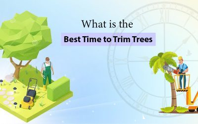What Is The Best Time To Trim Trees?