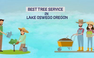 Best Tree Service In Lake Oswego Oregon