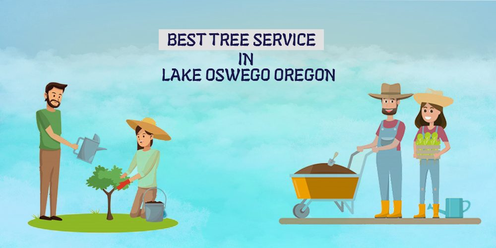 Best Tree Service In Lake Oswego Oregon