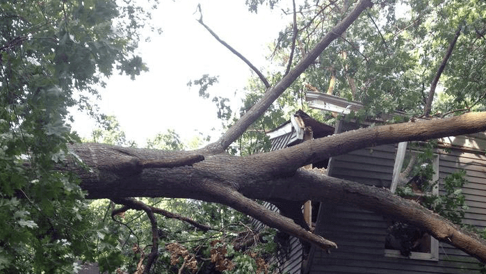 Emergency-Tree-Removal-Service