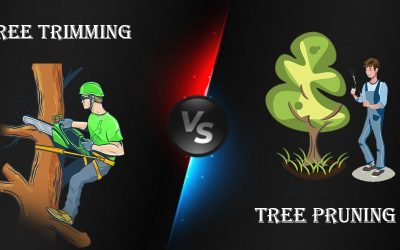 What Is The Difference Between Tree Trimming And Tree Pruning?