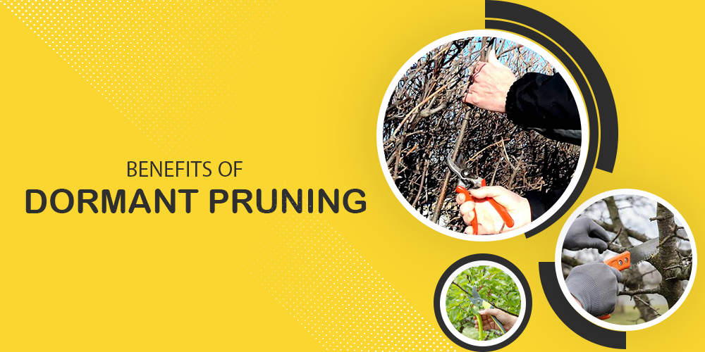 Benefits Of Dormant Tree Pruning
