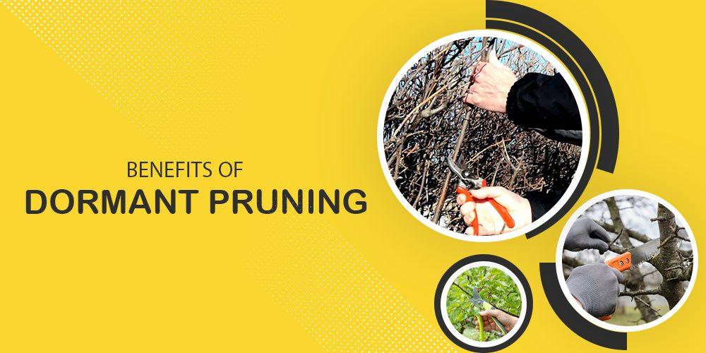 Benefits Of Dormant Tree Pruning