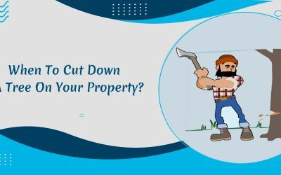 When To Cut Down A Tree On Your Property?