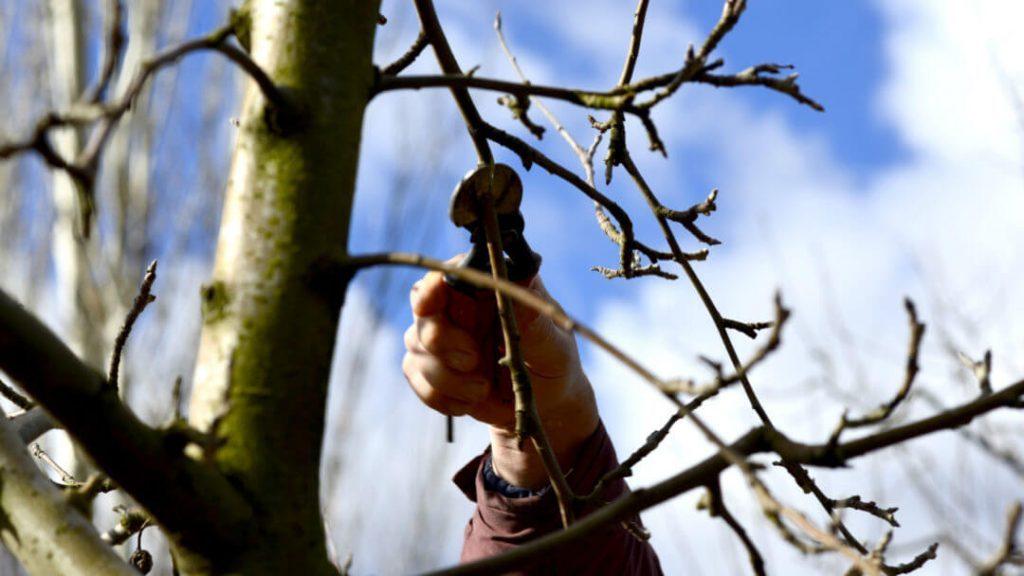 Dormant-Pruning