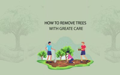 Remove Trees with Great Care – Take Professional Help in Portland