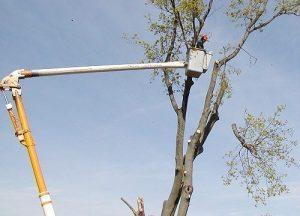Tree-Crane-Service