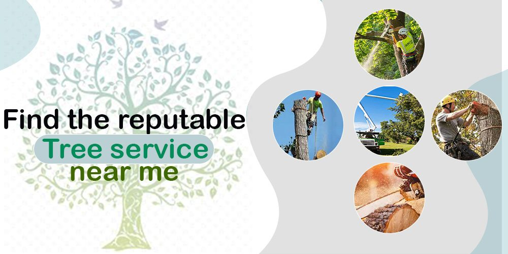How Can I Find the Best Reputable Tree Service Near Me?