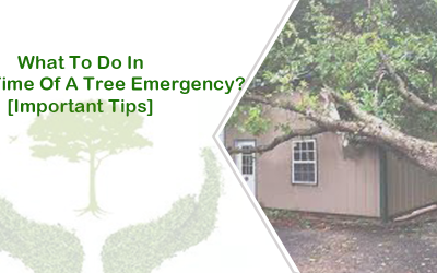 What To Do In The Time Of A Tree Emergency? [Important Tips]