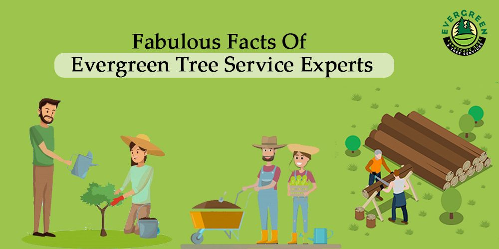 Fabulous Facts Of Evergreen Tree Service Experts