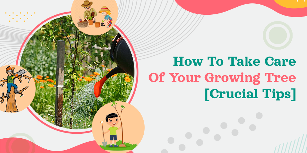 How To Take Care Of Your Growing Tree [Crucial Tips]